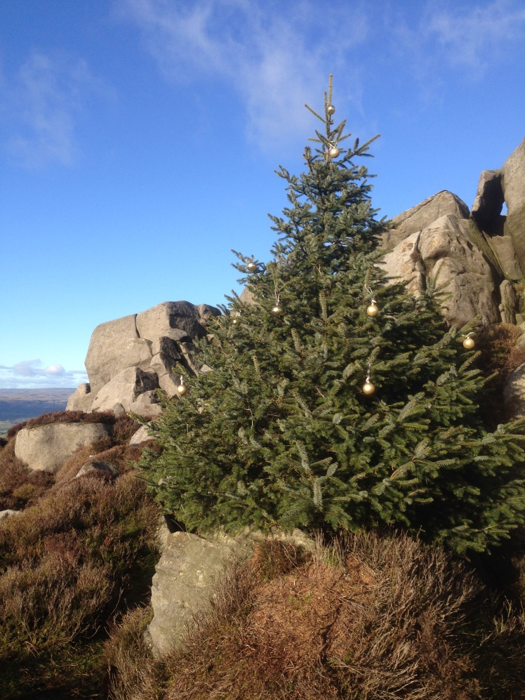 The decked tree on Simon's Seat (9/12/18).
